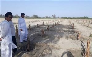۲۵۰۰ هکتار از باغات موز آسیب دیده از سیل در زرآباد به مدار تولید بازگشت