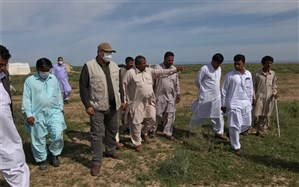 رتبه نخست دلگان در کشت گندم ، کلزا و کینوا در سالجاری در سیستان و بلوچستان