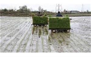 بیش از۶۵۰۰ دستگاه نشاء کار در گیلان آماده کاشت برنج است