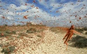 آغاز عملیات سمپاشی علیه ملخهای صحرایی در سطح 5 هزار هکتار در شهرستان لامرد