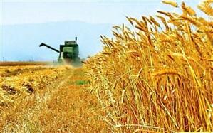 تحویل ۳ هزارتن گندم مازاد بر مصرف کشاورزان سیستان و بلوچستان به دولت