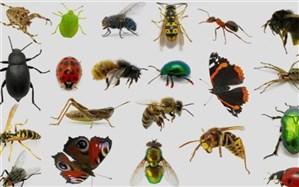 حشرات ناقل نه اما عامل جابهجایی کرونا هستند