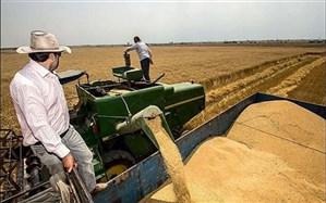 رئیس سازمان جهاد کشاورزی سیستان وبلوچستان: 8 هزار تن گندم مازاد بر مصرف استان تحویل دولت شد