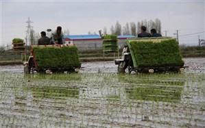 تلاش برای افزایش 10 درصدی کشت ماشینی برنج در گیلان