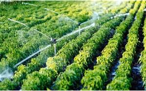محمودزاده: 85 درصد آب شیرین کشور در بخش کشاورزی  مصرف میشود