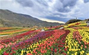 سفر مجازی دانش آموزان البرز به باغ لاله های کندر