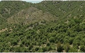 کاداستر جنگلها تا پایان امسال نهایی میشود