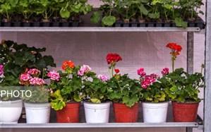 چگونه گل و گیاه آپارتمانی را تمیز کنیم؟
