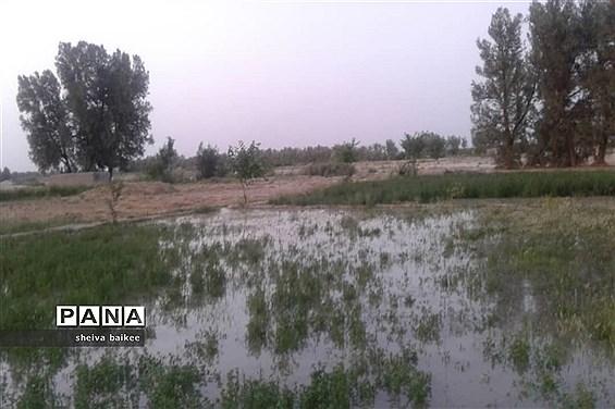طبیعت زیبا و بکر سیستان پس از دو دهه خشکسالی