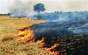 آتش زدن بقایای محصولات کشاورزی در البرز ممنوع است
