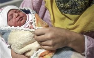 نوزاد عجول فاصله دلوار تا بوشهر را طاقت نیاورد