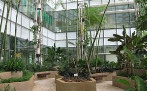 اتفاق خوب برای کتابخوانهای دوستدار محیط زیست: کتابخانه سبز در ساری احداث میشود