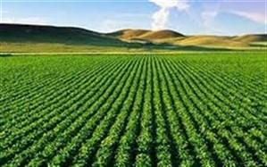 ۲ هزار و ۲۳۰ میلیارد ریال خسارت به بخش کشاورزی مهاباد وارد شد