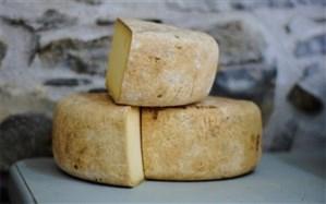 مصرف پنیر کپکزده برای مقابله با کرونا