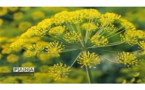 کشف گیاهان دارویی قاچاق درلارستان