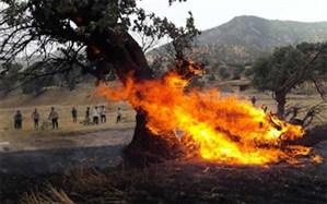 درخواست 10 سال حبس برای عاملان آتشسوزی جنگلها و مراتع