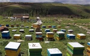 رشد ۶ برابری مرغداری و زنبورداری بوشهر