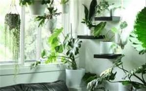 گیاهان هم میتوانند ناقل کرونا باشند؟