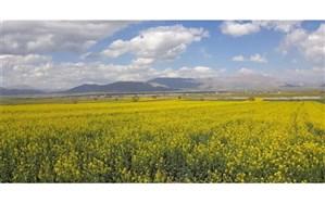 کشت گیاهان دارویی در آذربایجانغربی توسعه مییابد