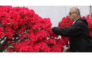 معلم بازنشسته ای که گل آزالیا پرورش میدهد
