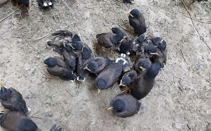 کشف حمل غیرمجاز پرندگان