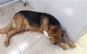 انتشار کلیپ کشتن سگ ماده باردار موجب دستگیری عامل این جنایت شد