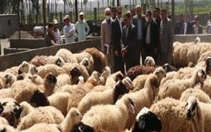 افتتاح واحد صنعتی پرورش گوسفند در چالدران