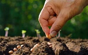 خودکفایی ۹۵ درصدی در تولید بذر