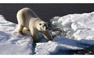گرمای نگرانکننده در قطب شمال، زمین در معرض خطر