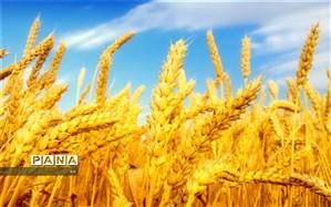 خریداری ۷۳ هزار تن گندم از کشاورزان اردبیلی