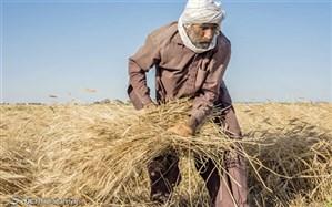 کار برداشت گندم در سیستان وبلوچستان رو به اتمام است