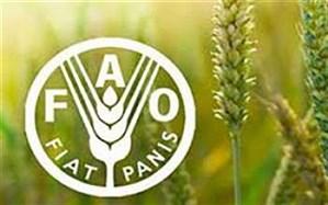 مقاومت میکروبی امنیت غذایی و معیشت میلیونها خانوار کشاورز را تهدید میکند