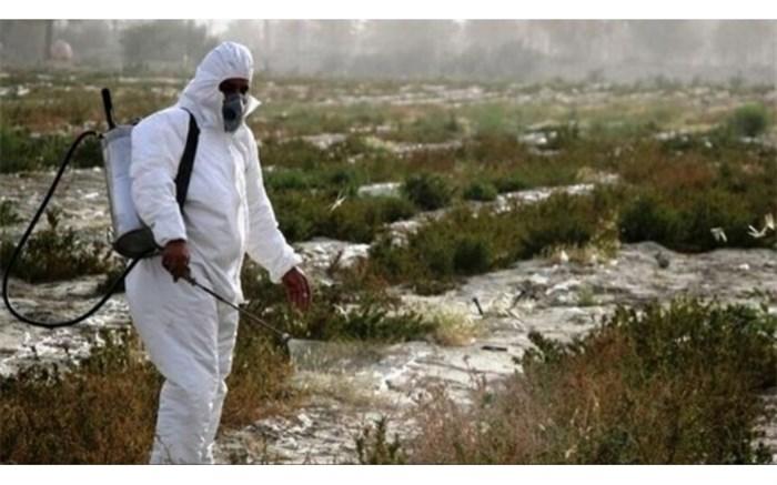 مبارزه با ملخ های صحرایی