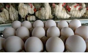 انحصار در واردات و مسئله ارز عمده دلیل گرانی مرغ و تخممرغ