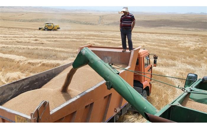 خرید تضمینی بیش از ٨٨۵ هزار تن گندم و کلزا از کشاورزان گلستانی