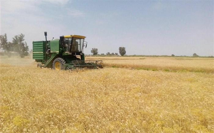اتمام برداشت گندم در شهرستان  خاش