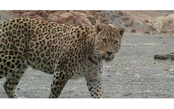 شناسایی زیستگاههای حیات وحش در مناطق مرکزی سیستان و بلوچستان