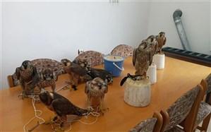 قاچاقچیان پرندگان شکاری در مازندران دستگیر شدند