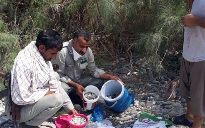 عامل صید با مواد شیمیایی در سیستان و بلوچستان دستگیر شد