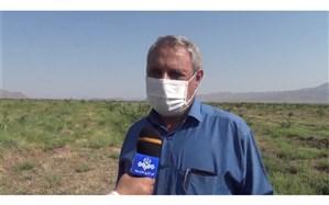 هجوم ملخها به ۸۰ هکتار از باغهای مرند