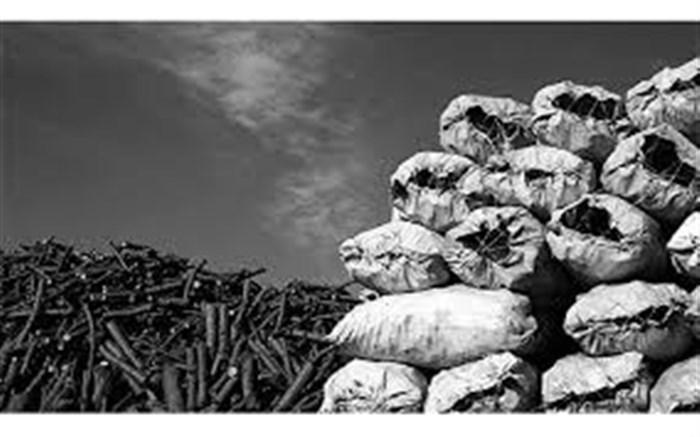 زغال جنگلی قاچاق