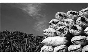 کشف انبار زغال جنگلی قاچاق در شهرستان رستم