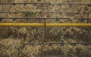 کود اوره برای کشت محصولات غیراساسی فراهم است
