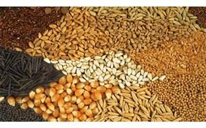 تاخیر در تامین ارز مورد نیاز نهادههای دامی منجر به بیکاری و کاهش تولید محصولات پروتئینی کشور خواهد شد