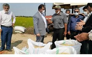 نخستین برداشت مکانیزه برنج در قائمشهر آغاز شد
