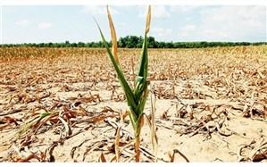 افزایش ۵۰ درصدی پرداخت غرامت محصولات کشاورزی