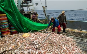 تولید ۲ هزار و ۵۰۰ تن گوشت ماهیان خاویاری در کشور