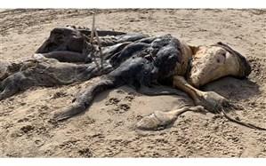 پیدا شدن جانور عجیب الخلقه در ساحل دریا + عکس