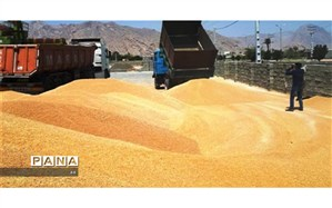 دپوی ۲۱۲ هزار تنی گندم در گمرک و بنادر