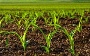 پیشنهاد معافیت صادرکنندگان کشاورزی از بازگرداندن ارز صادرات